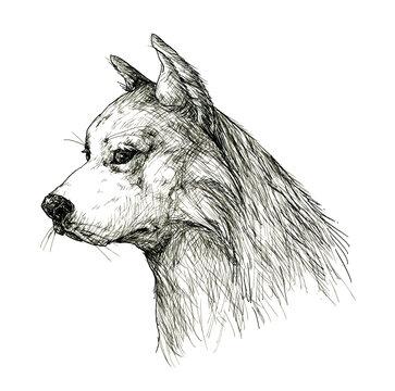 犬 ペン画