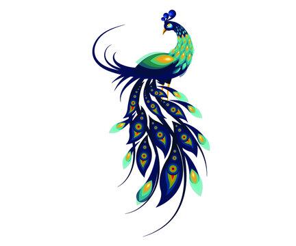 Peacock Bird Cartoon Flat Illustration, Bird Concept Art Vector, Print Ready T Shirt Logo Icon Design