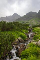 Fototapeta Potok w Tatrach obraz