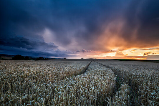 dramatic storm sky over wheat field at sun down