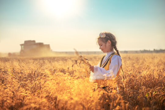 Young girl in traditional Bulgarian folklore costume at the agricultural wheat field during harvest time with industrial combine machine