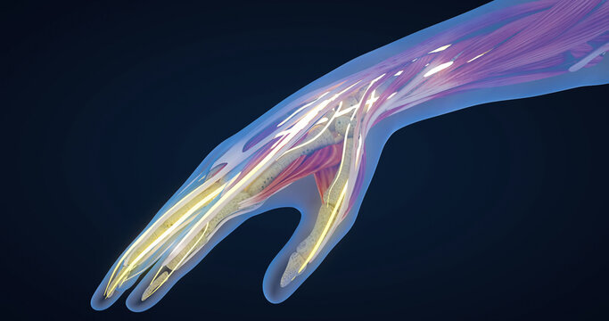 Carpal tunnel syndrome, carpal tunnel syndrome, median nerve entrapment and inflammation, hand anatomy, neurons, body tissues, 3D illustration