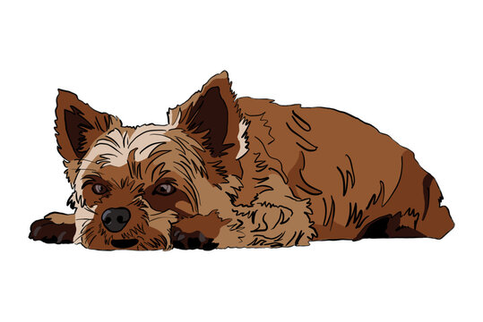 Cartoon drawing of Yorkshire Terrier relaxing - white background