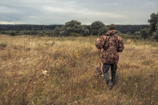 Hunter going through rural field with hunting dog Weimaraner during hunting season