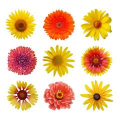 Macro photo flowers set: sunflower, zinnia, arnica montana, black eyed susan, yellow chamomile on white isolated background
