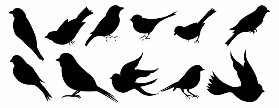bird silhouette vector collection set