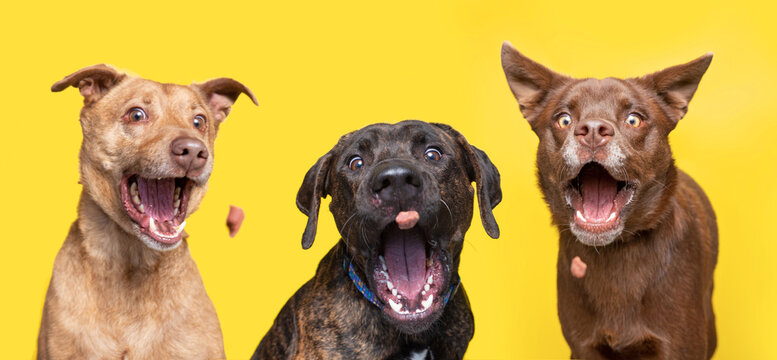 studio shot of cute dogs catching treats on an isolated background