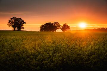 Mooie oranje zonsondergang in gele verkrachtingsvelden. Litouws landschap van landbouw.