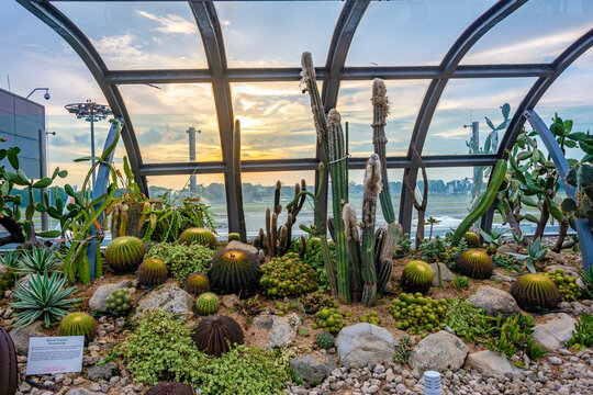 greenhouse with cactus plants