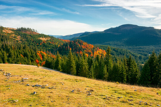 autumn landscape in mountains. trees and grassy meadow on the hillside. open view in to the valley. colorful nature scenery. wonderful sunny weather with clouds on the sky