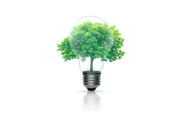 Light bulb with green tree inside isolated on white background. Green energy concept.