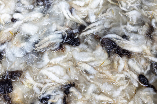 Raw sheeps wool fleece being washed. Vegetable matter (VM) visual in the water between the wool locks. Brown and white wool. Processing raw wool.