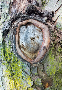 It's Knot Wood