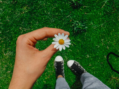 Hand holding small daisy flower with sneakers and green grass in background