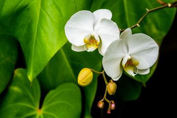 Orquídea IMG_8213