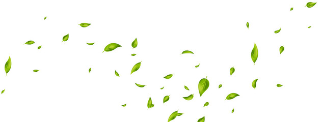 Green flying leaves on long white banner. Leaf falling. Wave foliage ornament. Ecology, eco, organic design element. Cosmetic pattern border. Fresh tea background. Beauty product. Vector illustration