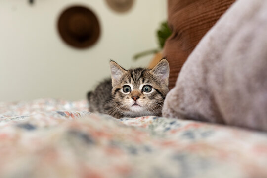 Kitten in the bed