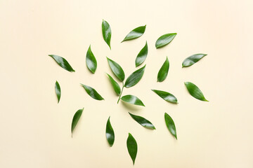Green tea leaves on color background
