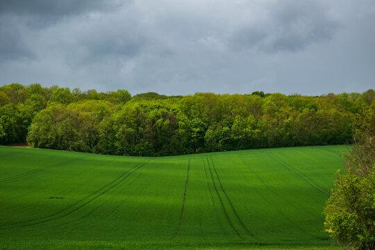 Green Stormy Field