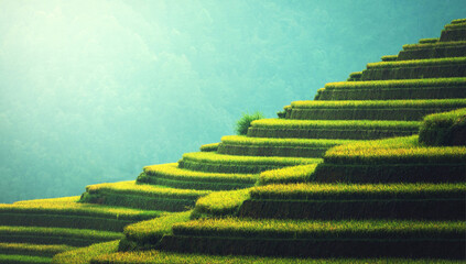 beautiful terraced rice fields background