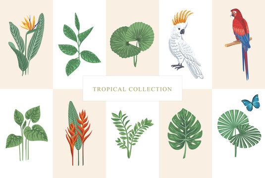 Vector tropical collection