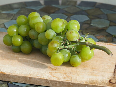 Bunch of cannnon hall muscat grapes