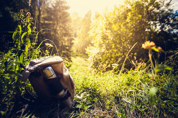 Backpack on the forest trail