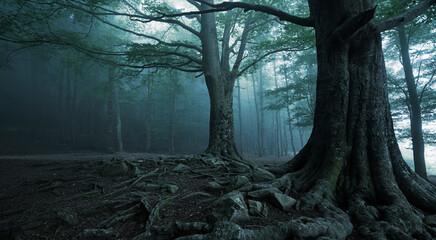 Obraz forest in darkness with fog - fototapety do salonu