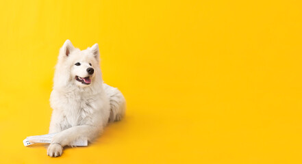 Cute funny dog with newspaper on color background with space for text