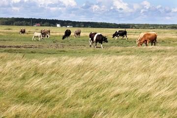 Piękny pejzaż z widokiem na pastwisko i pasące się krowy.