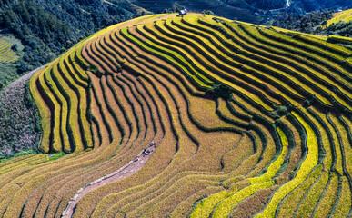 Terraced Rice Fields In Yen Bai, Vietnam