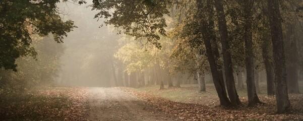 Oude asfalt landweg door de kleurrijke bladverliezende eik, berken, esdoorns met groene, oranje, gele, gouden bladeren. Mysterieuze ochtendmist. Natuurlijke tunnel. Donker sfeervol herfstlandschap
