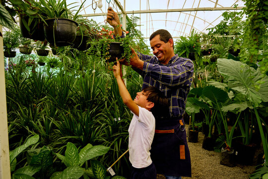cheerful latinx Mexican middle aged father and young children son gardener working together in a greenhouse
