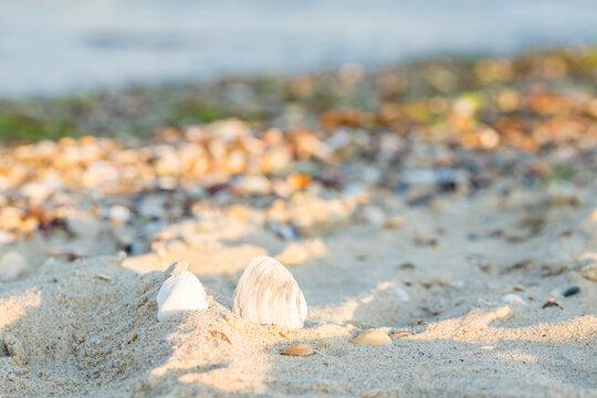 Seashells on the sand of the beach