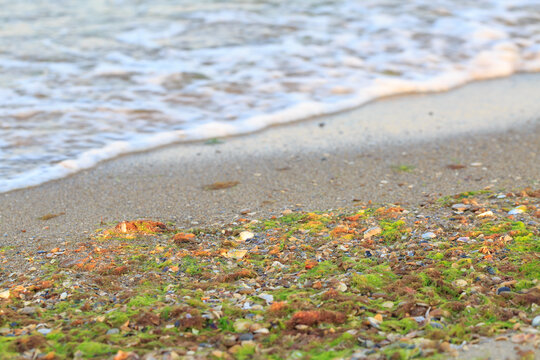 Seaweeds on the beach with waves