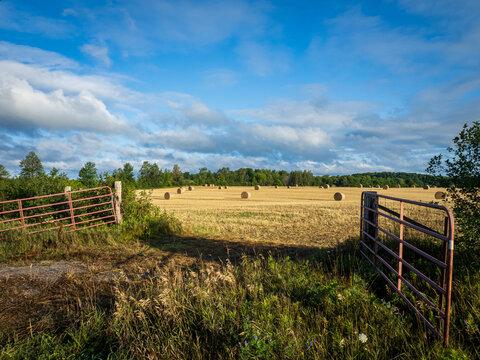 hay field at sunrise