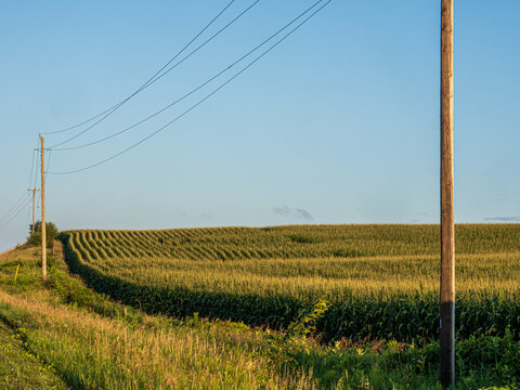 cornfield at sunrise with powerlines in foreground