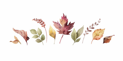 Fototapeta Watercolor vector banner with fall leaves and branches isolated on a white background. obraz