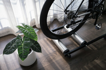 detail of road bike on rolling trainer and little plant in private space, indoor bike training at home during quarantine period, concept of cardio exercise for healthy heart, selective focus