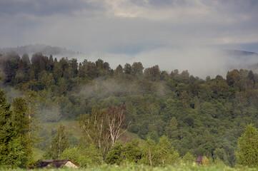 Polana las we mgle panorama