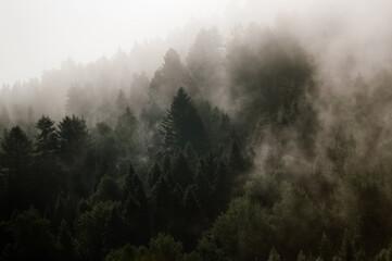 Krajobraz leśny wierzchołki drzew las we mgle