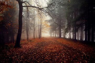 Mg艂a w lesie, jesienny krajobraz