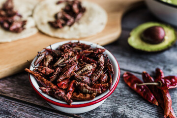 grasshoppers or chapulines snack. Traditional mexican food from Oaxaca Mexico