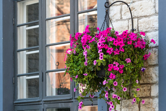 Facade of a building with windows and flowers.