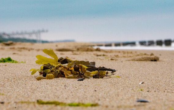 Wodorosty morze plaża