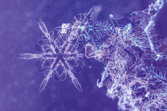 Macro image of snowflakes on purple background