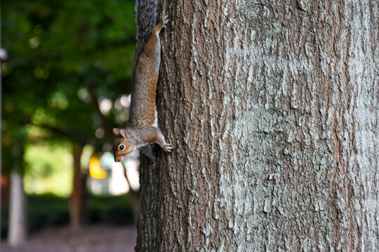 squirrel on a tree in a downtown Atlanta park