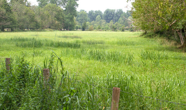 humid meadow of the marsh in the French Green Venice