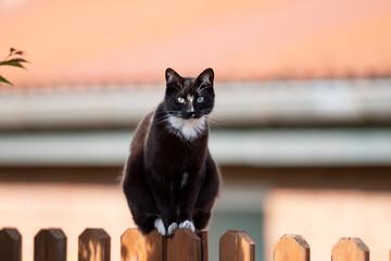 Obraz Katze auf einem Zaun - fototapety do salonu