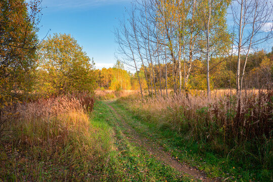 Rural pathway in the autumn forest